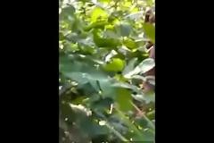 Clg couple fuck at jungle